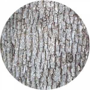 Scoarță de Stejar alb