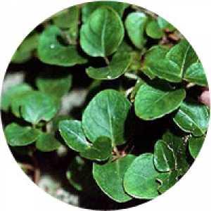 Combinaţia de plante No. 4