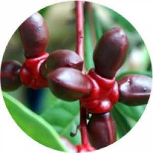 Combinaţia de plante No. 7