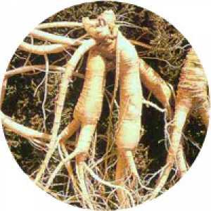 Combinaţia de plante No. 5