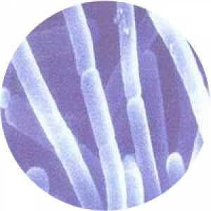 CoralProbiotic